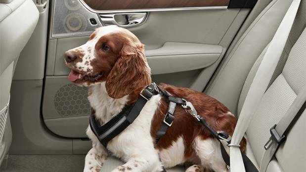 Volvo people are dog people: company makes its own animal restraints.