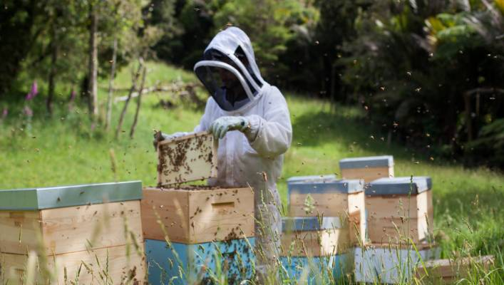 Beekeepers smarting over proposed 'tax on honey' | Stuff.co.nz