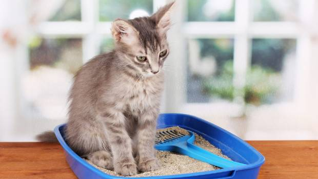 Parasite In Cat Poop May Make Humans More Business Savvy, Study Says
