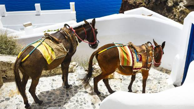 Greece Taking Burden Off Working Donkeys