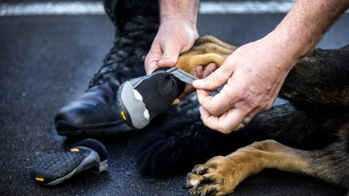 7b8263589da5 The  Ruffwear  shoes have the same sole as police officers  ...