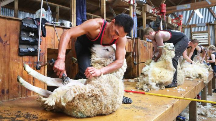 Shearing Industry Boosts Pay Packets To Retain Staff Stuff