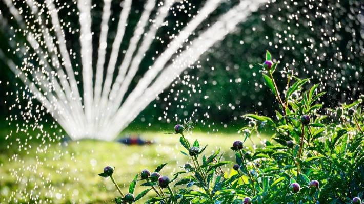 Sprinklers can only be used between  6 – 8am and 6 – 8pm from Saturday in Hamilton, Te Awamutu, Pirongia and Waikato district