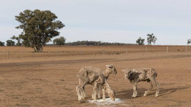 Australia's most populous state '100 percent' in drought