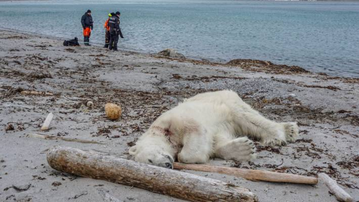 The polar bear's killing caused outrage.