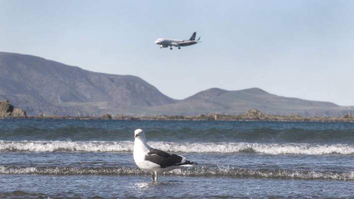 The project is ongoing - the airport is continuing to track four gulls using GPS.