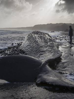 A group of Maori artists are working together in tribute to the 13 sperm whales that washed up along the South Taranaki ...