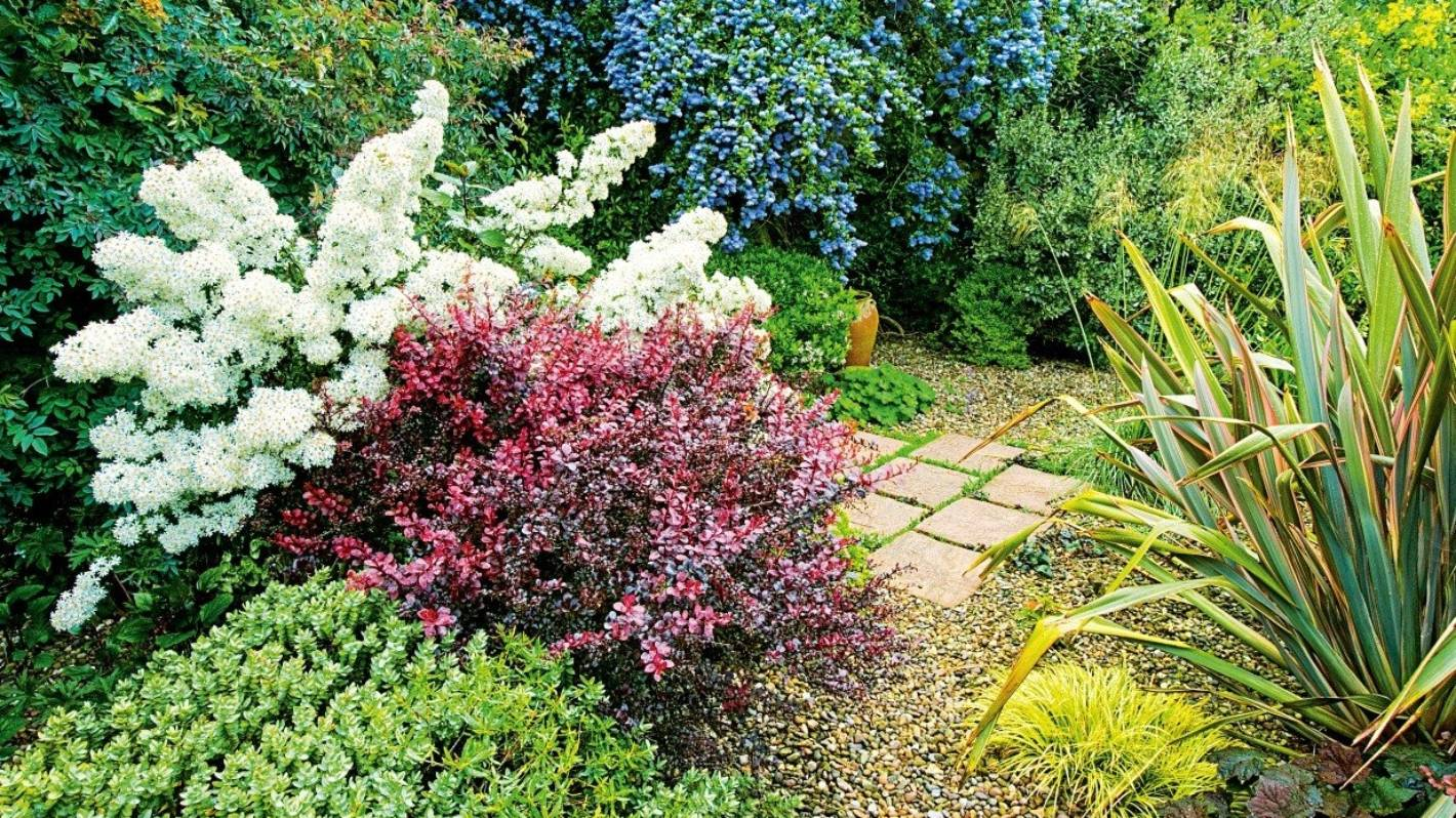 Planting Secrets For Successful Shrubs Stuff