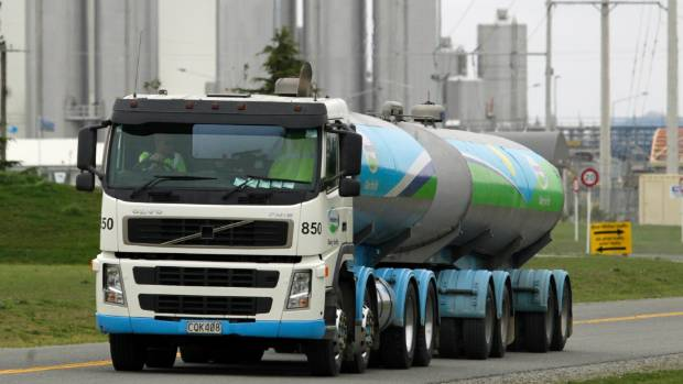 The milk tankers of Fonterra leave the factory in Darfield, where coal is burned to make dry milk powder.
