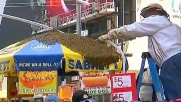 Thousands of bees besiege hot dog stand in New York's Times Square