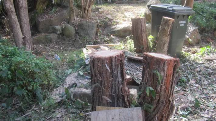 Australian Woman Fined 90 600 For Chopping Down Neighbour S Trees