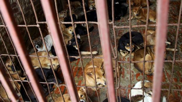 Stop eating dog meat: Hanoi residents told