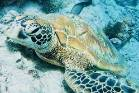This photo was taken on a turtle tour in Rarotonga with Ariki Adventures. We were able to dive down and get up close and ...