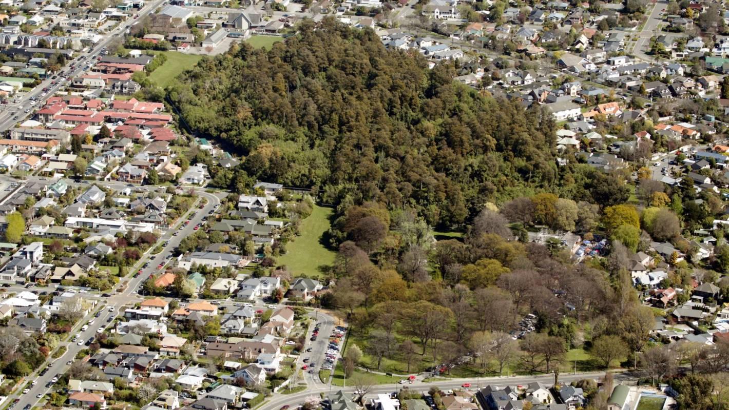 Riccarton Bush a precious remnant of Canterbury's ecological past |  Stuff.co.nz