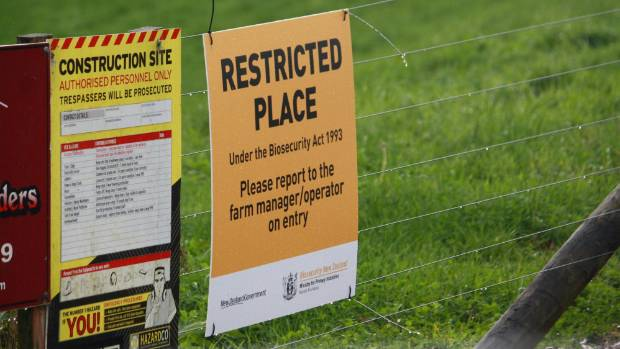 tasman farm infected with cattle disease stuff co nz