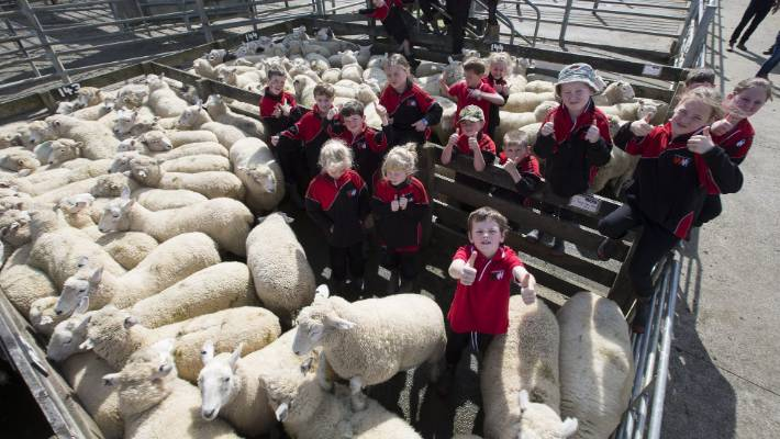 Lamb sale yields good return for Waituna West pupils | Stuff