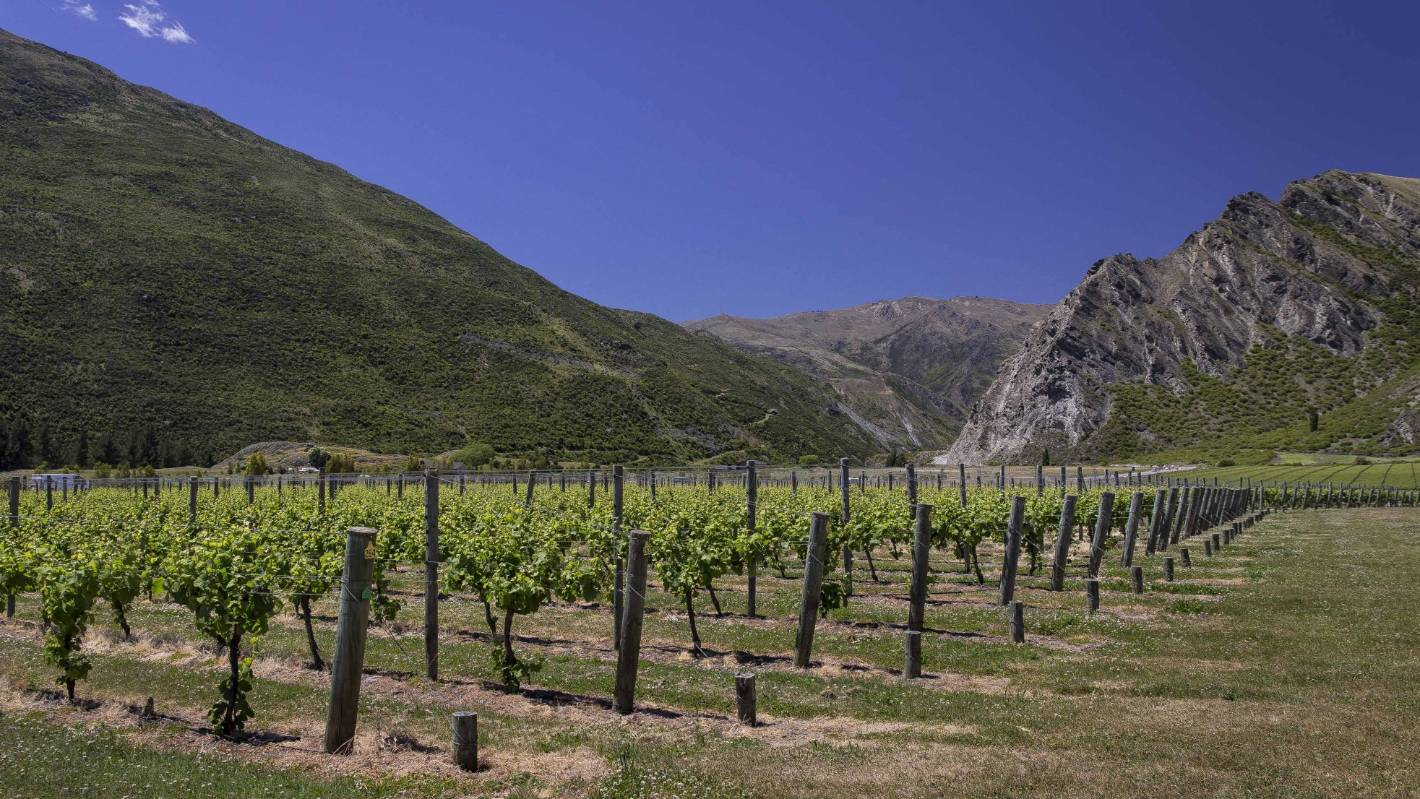 stuff.co.nz - The Central Otago wine harvest: 'Life-enhancing humanity at its joyous best