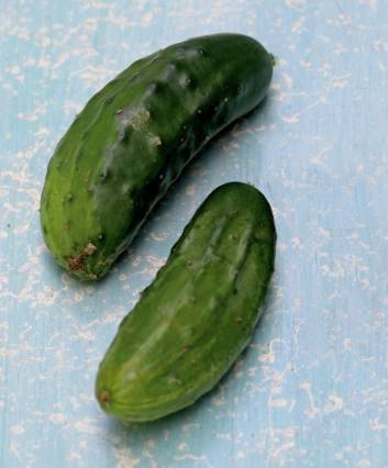 Cool cucumbers: variety guide and growing tips   Stuff co nz