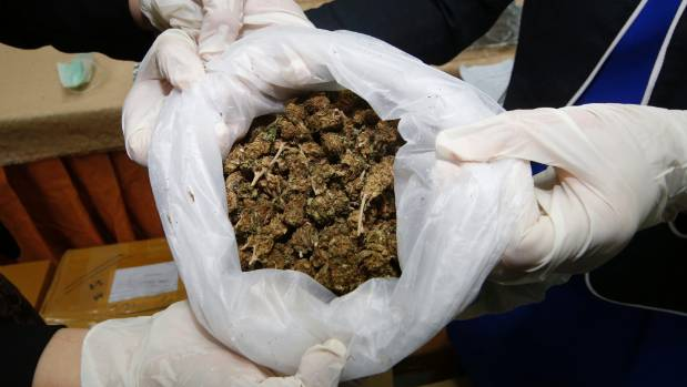 Thai officers show some marijuana buds as Thai police handed over around 100kg of seized marijuana for medical research.