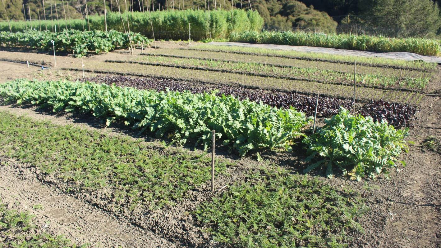 Students will be able to monitor garden conditions from the classroom and even from home, useful over the school holidays. (File photo)