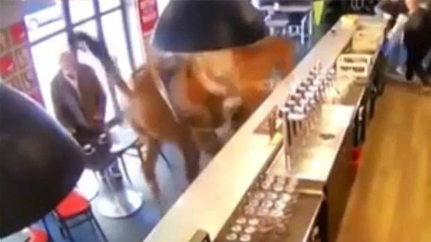 Horse walks into a bar in France: Runaway animal sends patrons running
