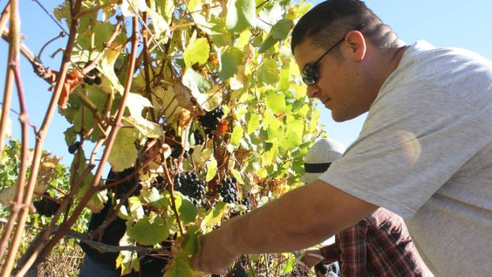 Shortage' of Marlborough land touted in vineyard investment offer