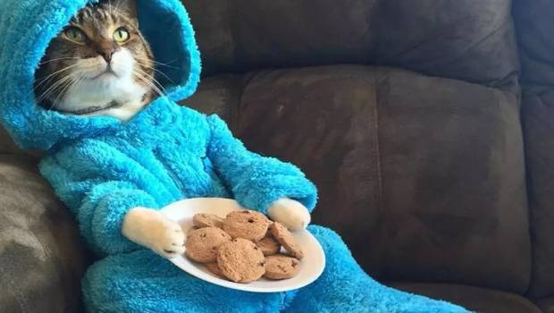 USA embassy sorry for sending Cookie Monster cat pajama invitation