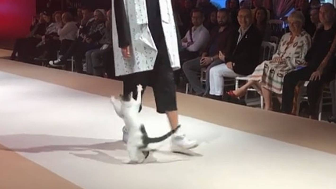 8289e0e2d1 Cat crashes fashion show in Turkey