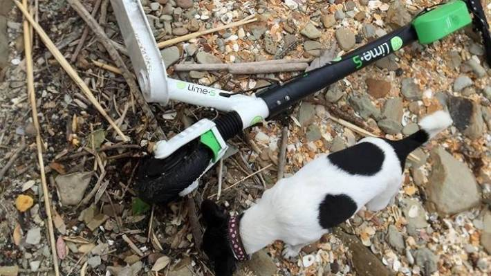 A man from Auckland, Zane Catterall's dog, Hollie, checks the Lime scooter, which was washed off the shore from Devonport to the north.