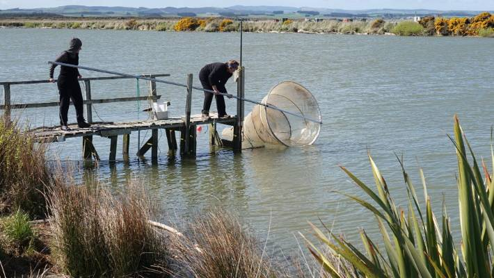 Whitebaiters on the South Bay, downstream of the Mataura River.