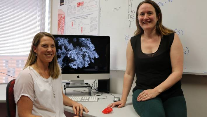 Dr Alys Clark (right) from the Auckland Bioengineering Institute and Dr Jo James from the School of Medicine at the University of Auckland have been awarded a Marsden Fund grant.