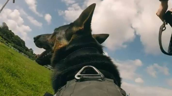 Police dog locates woman's missing keys in seconds | Stuff co nz