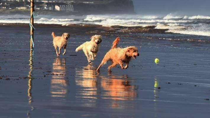 Dog Drinking Too Much Salt Water