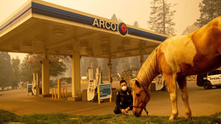 Officer Randy Law tends to a rescued horse as a wildfire burns in Paradise.