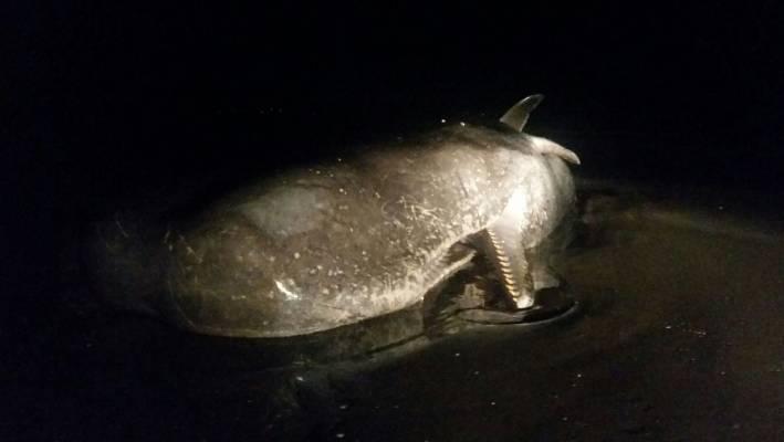 Are mistaken. dead sperm whale labour. Prompt