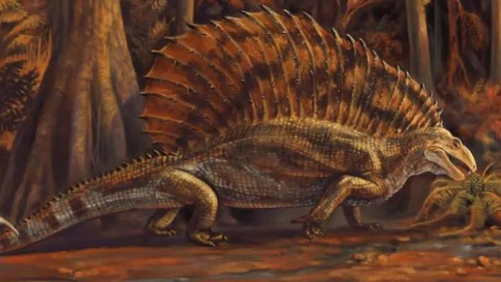The oldest specialized tetrapod herbivore: a new Permian eupelycosaurus from New Mexico, USA.