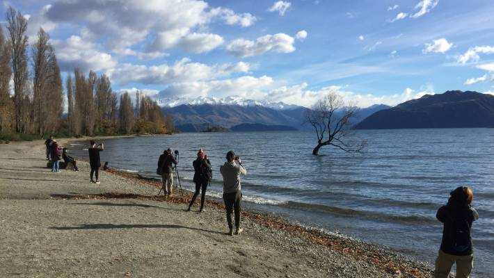 Location, location: Something tells me That Wanaka Tree wouldn't attract so much attention if it were in town.