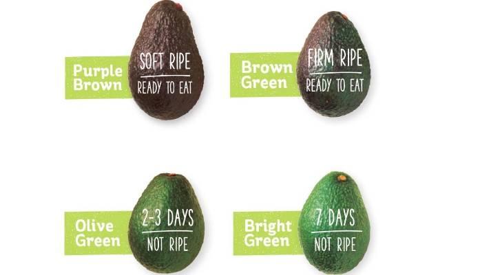 Avocado Ripe Charts - ovulation signs