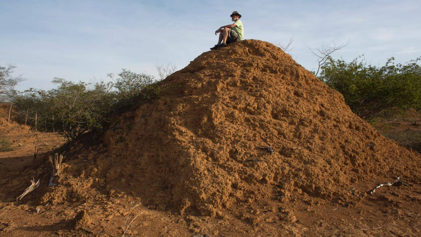 In Brazil Backlands  Termites Built More Than 200 Million Mounds Of Dirt