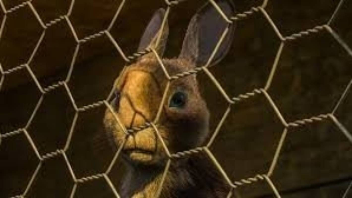 Watership Down: The rabbits that changed my life are back | Stuff co nz