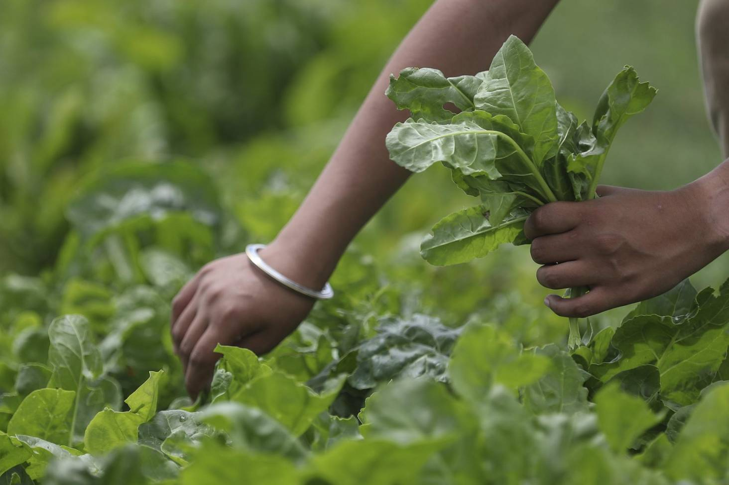 Winter gardening guide: vegetables and herbs that love the cold ...
