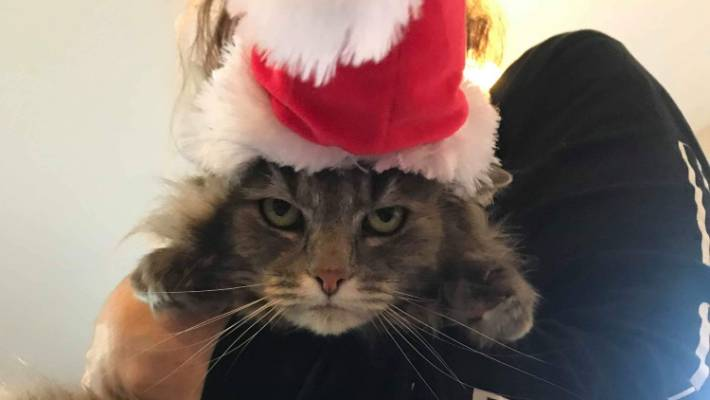 Sushi the cat wasn't too impressed with the xmas hat.