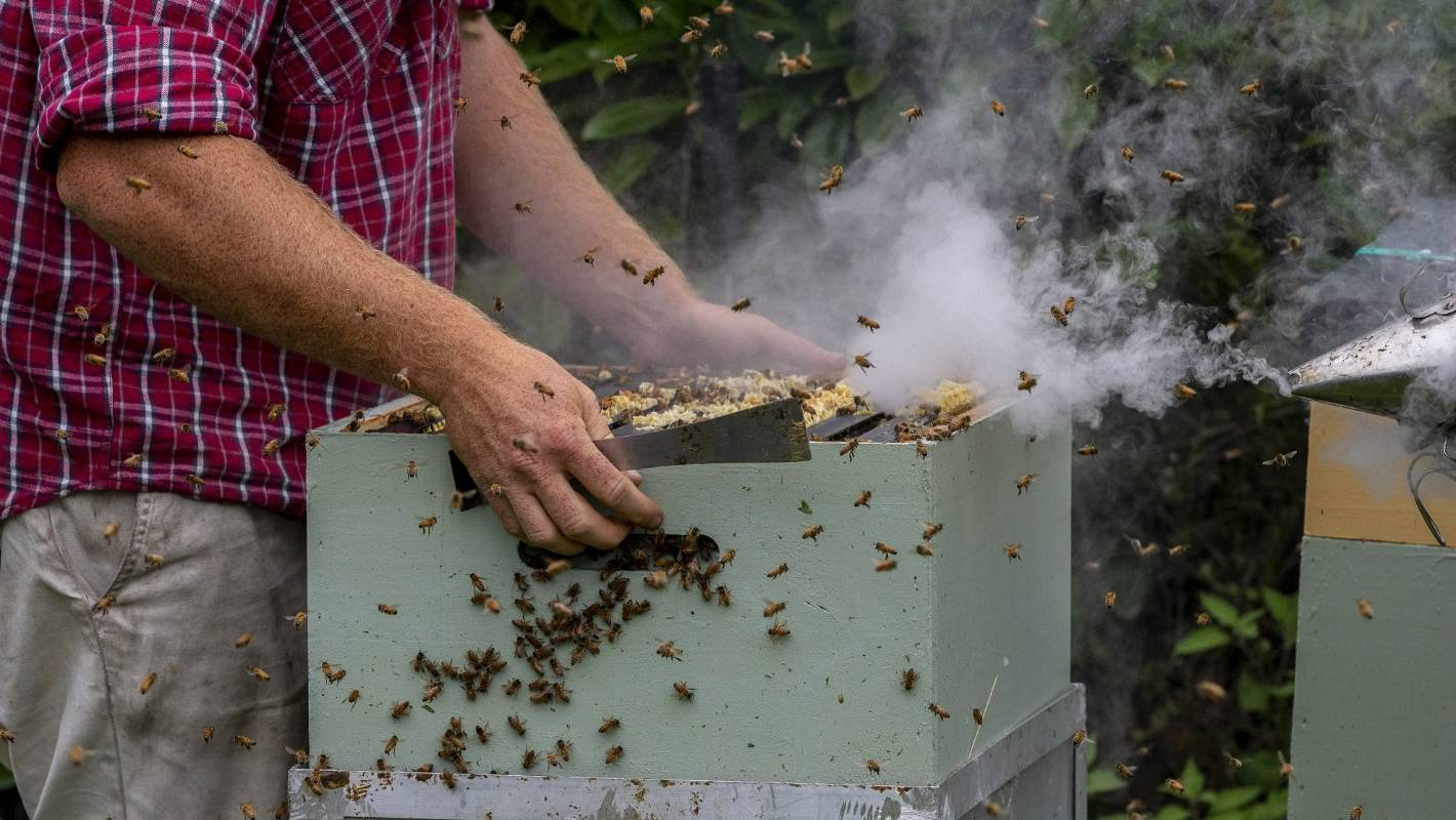 Sweet success as first honey is harvested from red zone