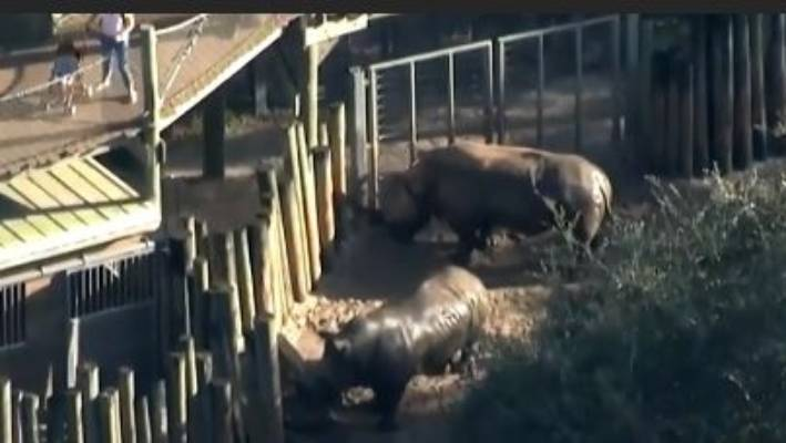 Child enters US rhino enclosure, treated in hospital