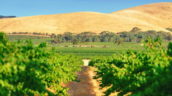 The Barossa Valley, one of Australia's most famous wine regions, is 56km north-east of Adelaide.