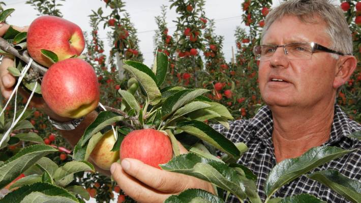 Apple grower David Easton says there is a risk of a seasonal labour shortage in Tasman district again this season.