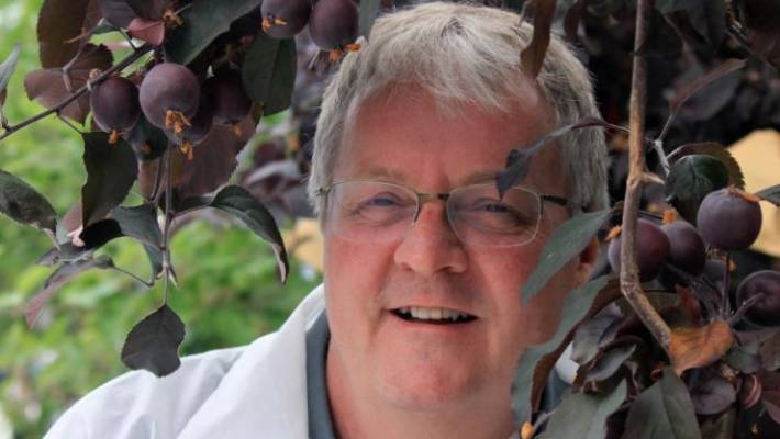 Professor Andrew Allan with one of the trees bearing red-fleshed apples.