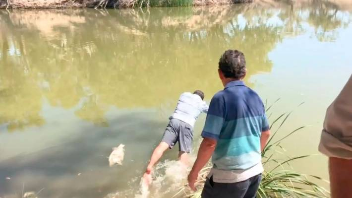 NSW MP vomits as he holds dead fish