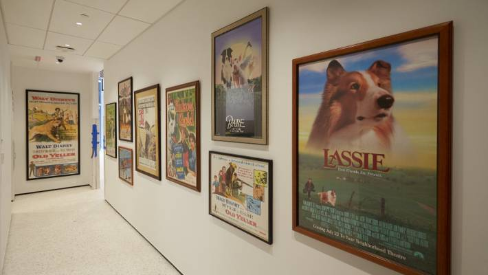 Posters of some famous TV and film dogs.