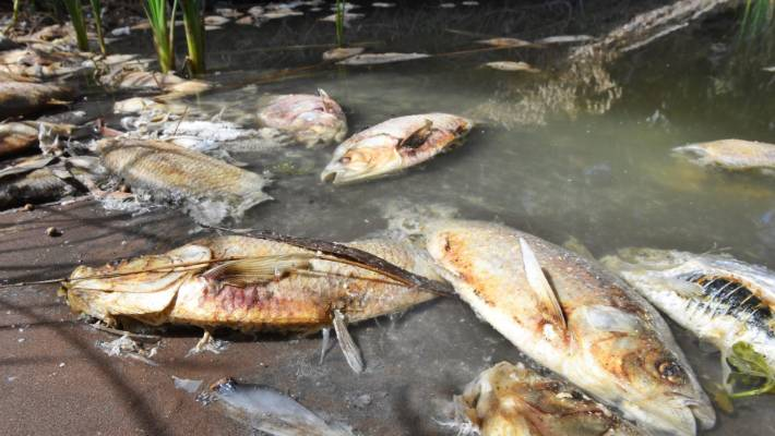 Fury over Darling fish deaths